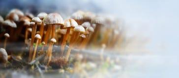 Малые грибы в лесе с осенью fog, формат w панорамы стоковое фото