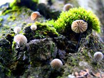 Малые грибы, как зонтики, выросли на дереве Стоковые Изображения