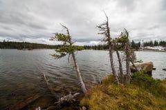 Малые деревья борются для того чтобы выдержать в жестком климате около озера горы Стоковое Изображение RF