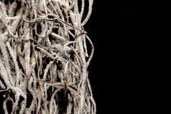 Малые деревянные корни на черной предпосылке стоковые изображения