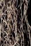 Малые деревянные корни на черной предпосылке стоковые изображения rf