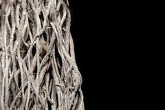Малые деревянные корни на черной предпосылке стоковые фотографии rf