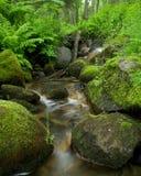 малые древесины потока Стоковое Изображение