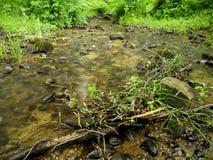 малые древесины потока Стоковое Фото