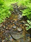 малые древесины потока Стоковые Фотографии RF