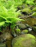 малые древесины потока Стоковая Фотография