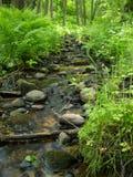 малые древесины потока Стоковая Фотография RF
