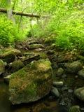 малые древесины потока Стоковое фото RF