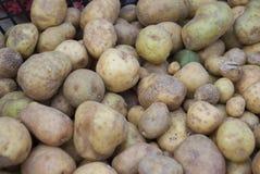 Малые картошки семени лежат в коробке перед засаживать Стоковое Фото