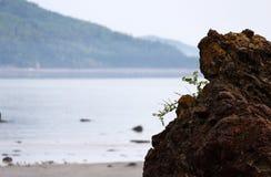 Малые листья приходя из утеса в национальном парке Bic стоковое изображение rf