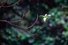 Малые листья растя на в противном случае чуть-чуть ветви дерева Стоковое Изображение