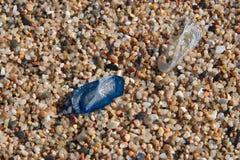Малые медузы на камешках на конце-вверх пляжа стоковое изображение rf