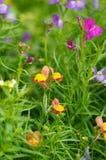 Малые, милые цветки в солнечном свете, Chiang Rai, Таиланд Стоковое Изображение RF