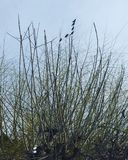 Малые птицы на ветвях дерева Стоковое Изображение
