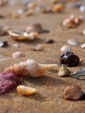 Малые раковины на пляже Стоковое Изображение RF