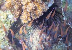 Малые рыбы и мальчишка моря Фото тропических жителей seashore подводное Стоковое Изображение