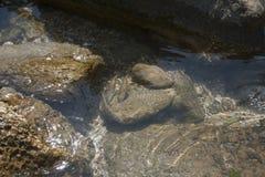 Малые рыбы подводные в seacost моря Стоковое фото RF