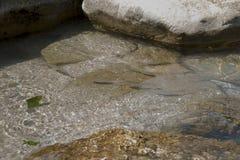 Малые рыбы подводные в seacost моря Стоковое Фото