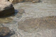 Малые рыбы подводные в seacost моря Стоковые Изображения RF