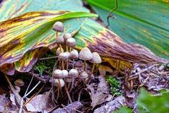 Малые серые поганковые в зеленых листьях в лесе Стоковое Изображение