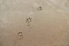 Малые следы ноги собаки в песке стоковое изображение