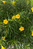 Малые товарищеские цветки на всходе конца-вверх в острове kos Стоковое Фото