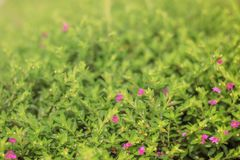 Малые фиолетовые цветки в саде стоковое изображение rf