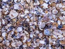 Малые части seashells на пляже стоковые изображения