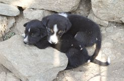 Малые puppys Стоковое фото RF