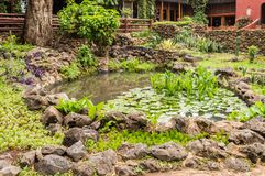 Малый бассейн воды при лилии и тростники воды окруженные Ла стоковая фотография