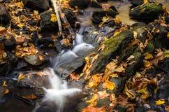 Малый водопад вдоль заводи Стоковые Изображения RF