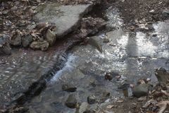 Малый водопад в потоке леса стоковая фотография