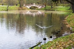 Малый декоративный пешеход моста через резервуар в городе Forest Park Стоковая Фотография