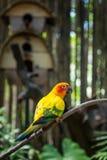 Малый желтый попугай в тропическом лесе на солнечный день Стоковые Фотографии RF