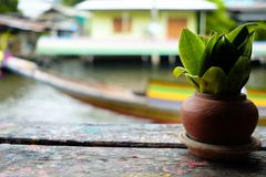 Малый завод в испеченном глиняном горшке на деревянном столе Стоковые Фото