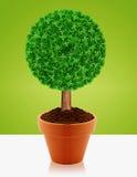 Малый зеленый вал Стоковое Фото