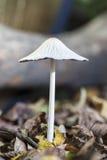 Малый зонтик Стоковое Изображение RF