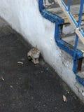 Малый котенок сидит рядом с конкретным комплектом шагов Стоковые Фотографии RF
