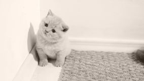 Малый котенок сидя на половике сток-видео