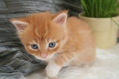 Малый котенок стоковое фото rf