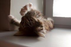 Малый котенок tabby протягивая под солнечностью стоковые фото