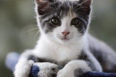 Малый кот стоковое изображение