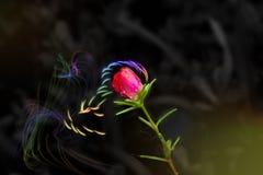 Малый красный цветок Стоковое Изображение