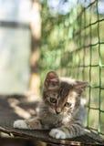 Малый милый котенок расслаблен и греющся в солнце на balco Стоковое фото RF