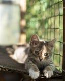 Малый милый котенок расслаблен и греющся в солнце на balco Стоковая Фотография RF