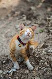 Малый милый кот в белых носках Стоковая Фотография RF