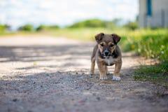 Малый милый щенок смотря в камере Стоковая Фотография RF