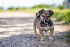 Малый милый щенок смотря в камере Стоковые Фотографии RF