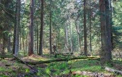 Малый поток леса в утре весеннего времени Стоковое фото RF