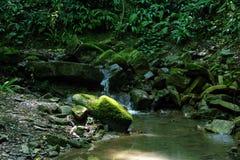 Малый поток среди камней Стоковая Фотография RF